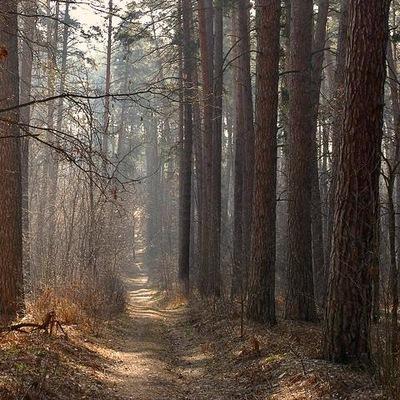 Лесной Массив, 20 декабря 1985, Москва, id200949426