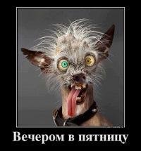 Yarina Didenko, 17 декабря , Москва, id176330356