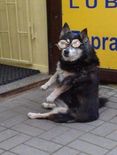 Собака Друг, 3 марта 1992, Минск, id206698853