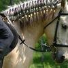 Vaikla-Leisure-Center Horse-Stable