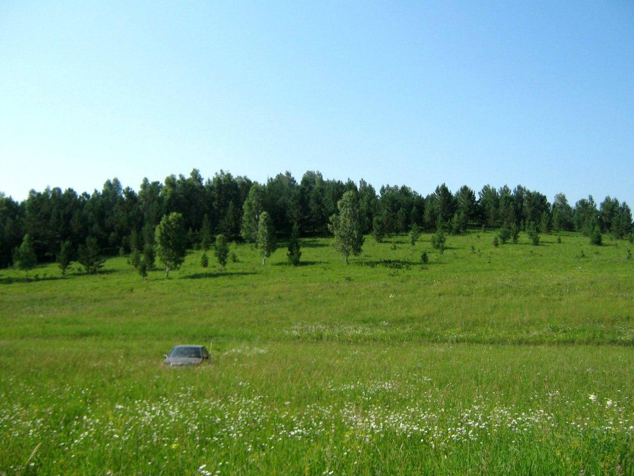 Чарышский грибной лес
