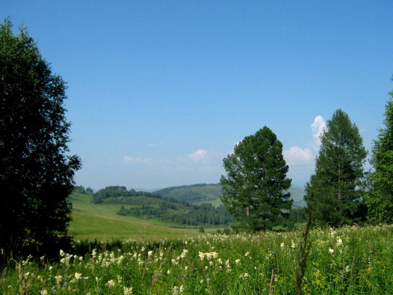 Чарышский район. Грибной лес