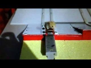 Житель Австралии научил лабораторных мышей кататься на серфинге - Первый канал