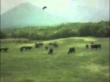 1983 Footage of Grazing Cow Abducted by UFO in Puerto Gaboto, Argentina