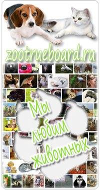 Картинки кошки собаки природа