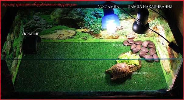 Террариум своими руками для сухопутных черепах
