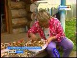 Тихая охота: в самом грибном краю Прикамья Коми - округе начался очередной сезон