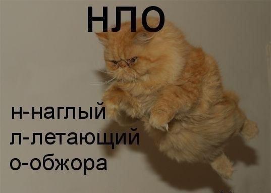 Смех с котами