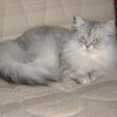 Соня Дашко, 2 февраля 1992, id221131722
