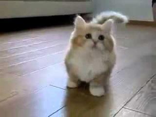 секс кошки и кота видео