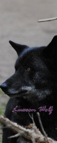 Luxeon Wolf, 18 июля 1998, Мозырь, id193897437