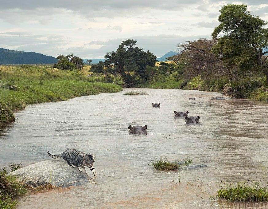 Приключения кота в Африке