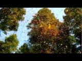 The Beauty of Nature Rachel Portman