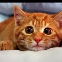 фото котики рыжие