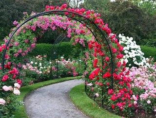 Чудо сад своими руками