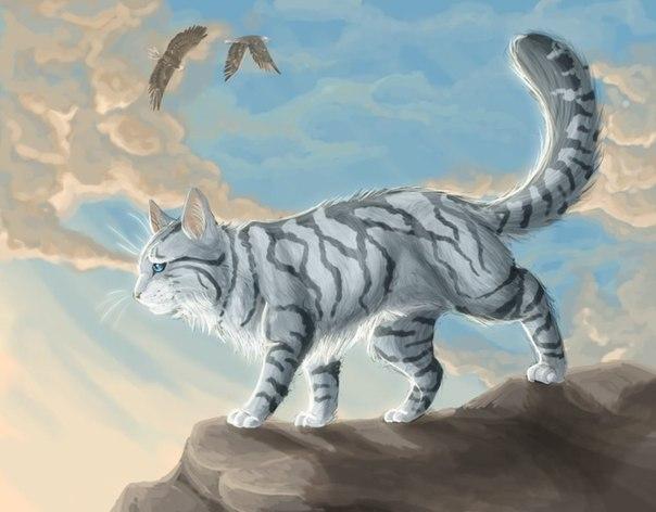 Коты воители ласточка картинки