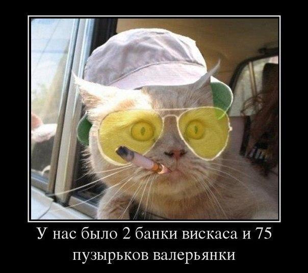 Прически 73
