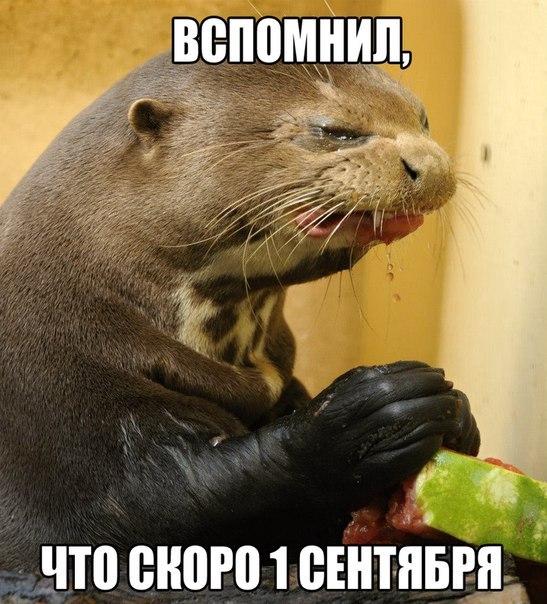 http://cs308431.vk.me/v308431814/8b18/v3_7mOeLk3A.jpg