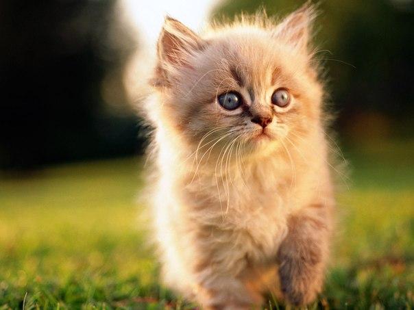 Картинки котёнок.