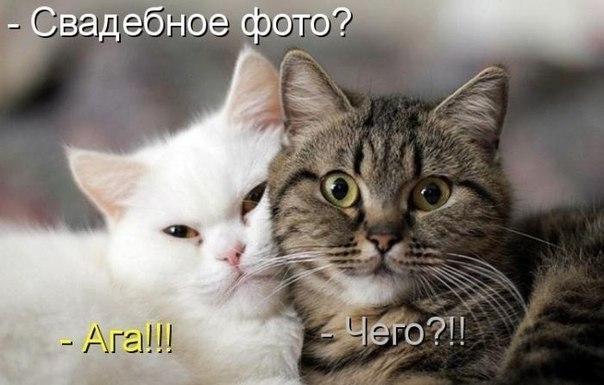 Что делать если кошка гадит и как отучить кошку гадить
