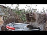 Кошка Лапочка ловит рыбу
