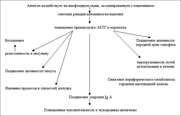 Схема 4: Синдром стресса