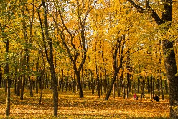 Курортный парк в г.Ессентуки.