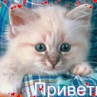 Дарина Камдина, 10 января 1998, Саранск, id188257435