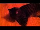 ты охуенный кот