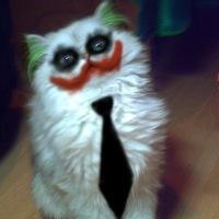 фото обычный кот