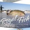 Рыболовный клуб Москвы | royalfishing