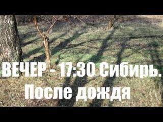 Вечер 17:30, После дождя, Сибирь, Лес, Березы,  Деревня - (В гостях у Метатроныча)