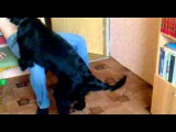 Собака трахает человека! (A dog fucks a man)