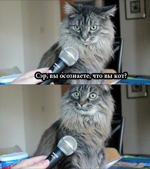 вы кот