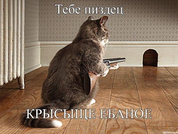 приколы про животных бесплатно: