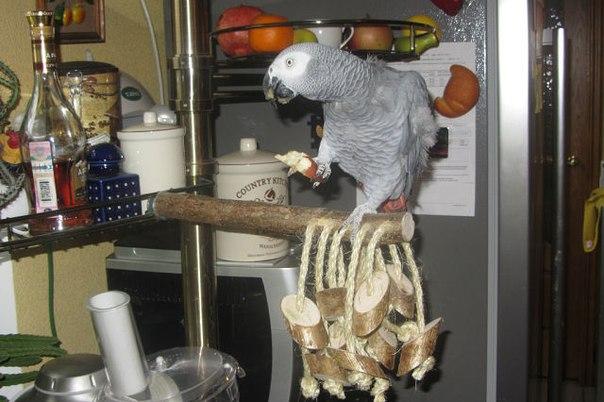 Как сделать лестницу для попугаев своими руками