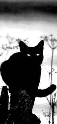 Аня Тимофеева, 5 января 1997, Северодонецк, id130673529