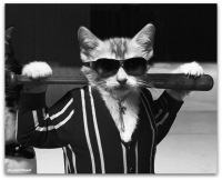 крутого картинки кота
