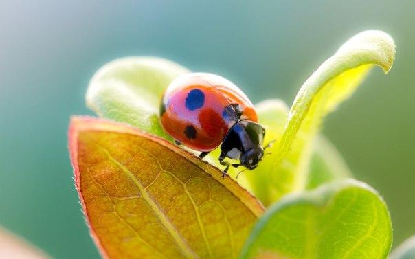 Нет ничего более изобретательного, чем природа.....