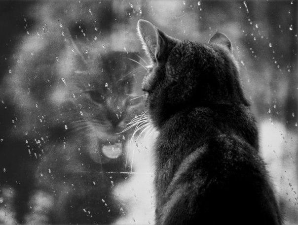 Кіт у вікні дощ