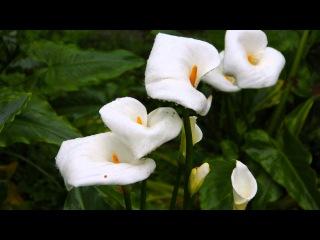 阿里山的花雨露 -  Alishan Flowers & Rain Dew