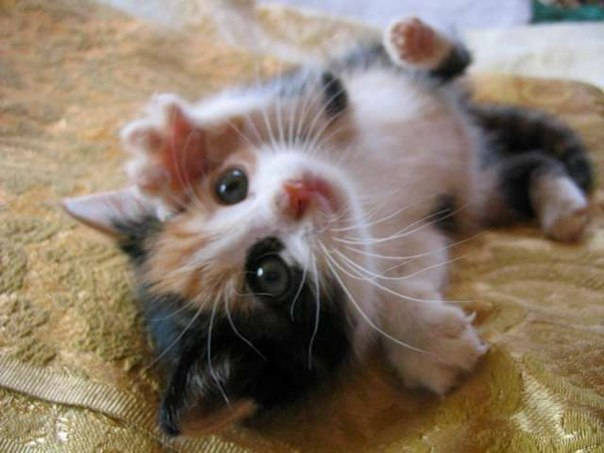 Самые красивые и милые котята updated the
