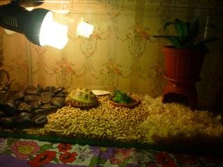 Как сделать акватеррариум для черепахи своими руками с фото