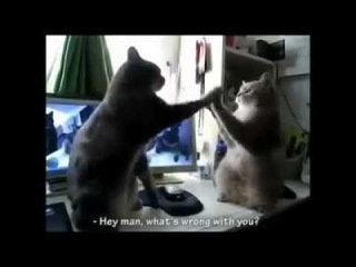 French cats clapping their paws - English subs!