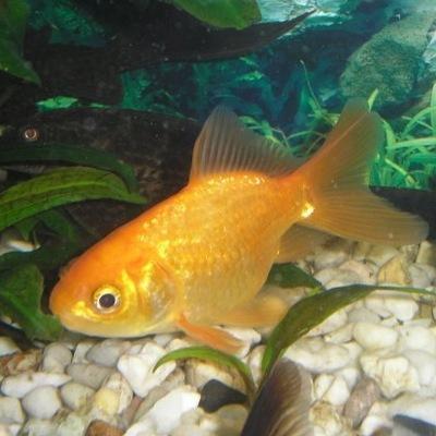 Рыбка Золотая, 5 февраля 1996, Умань, id197778488