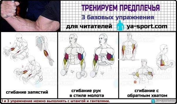 Как накачать за неделю мышцы в домашних условиях