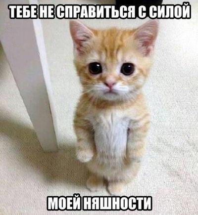 Дмитрий Соколов, 27 января 1991, Москва, id2626245