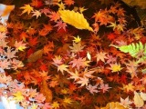 [HD]Tokyo Autumn leaves spots 秋の東京の紅葉の名所案内 紅葉便り 日本の秋