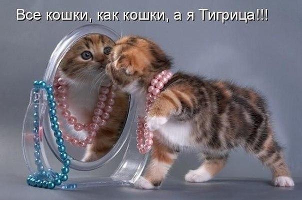 http://cs308916.vk.me/v308916869/335c/JYT-NCLWG9o.jpg