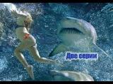 ''Стая акул''  Две серии.
